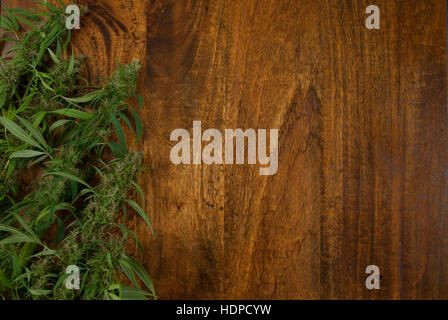 closeup of flowering Cannabis sativa weed plants on wooden background with copy space - Stock Photo