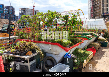 The Skip Garden, a community resource providing a green oasis in the middle of the King's Cross development, London, - Stock Photo