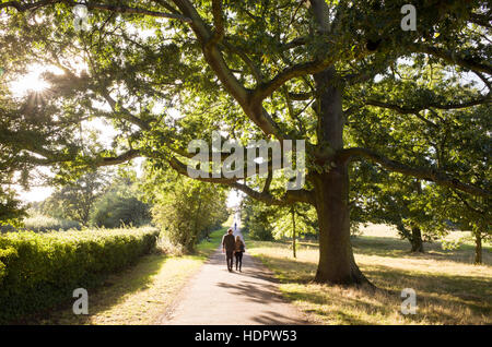 Tree and path leading up to the top of Parliament Hill on Hampstead Heath, London, England, UK - Stock Photo