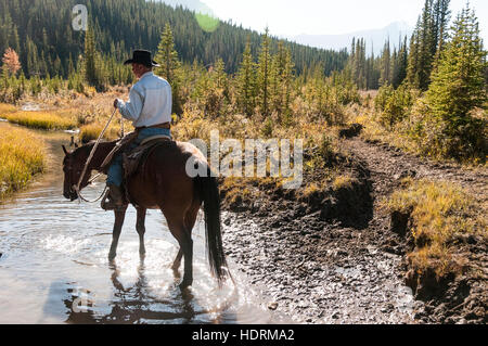 Cowboy and horse in creek, Clearwater County; Alberta, Canada - Stock Photo