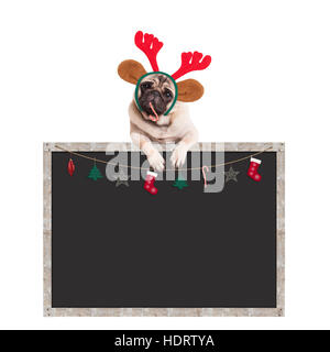 cute pug puppy dog eating candy cane and hanging with paws on blank blackboard sign with Christmas decoration, on - Stock Photo