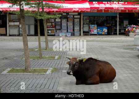 Cow in front of Souvenir Shop on Lantau Island in Hong Kong, China. - Stock Photo