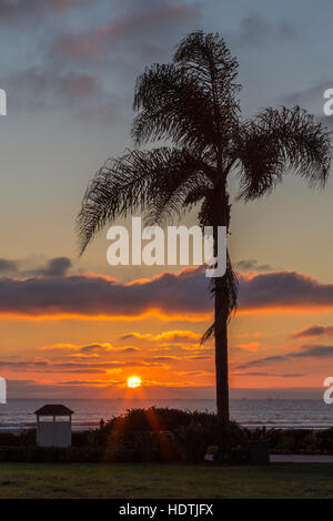 Taken on a holiday visit to California in January and shows a single palm tree with a beautiful sky and setting - Stock Photo