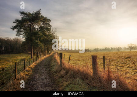 UK COUNTRYSIDE: Early morning light on a country path lined with Scots pine trees, Ilkley, West Yorkshire, England, - Stock Photo