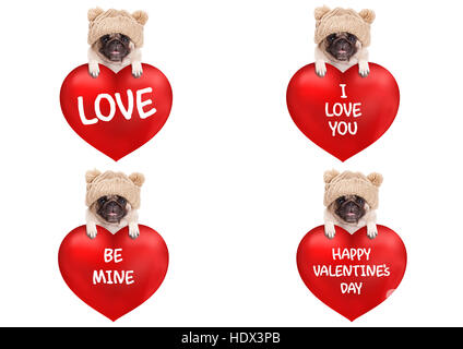 lovely cute pug puppy dog hanging with paws on big valentine's day heart with text, isolated on white background - Stock Photo