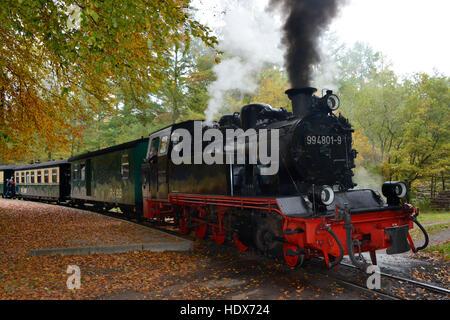 Rasender Roland, Granitzer Wald, Ruegen, Mecklenburg-Vorpommern, Deutschland - Stock Photo