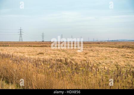 Marshland Faversham Creek Hollowshore Kent England - Stock Photo