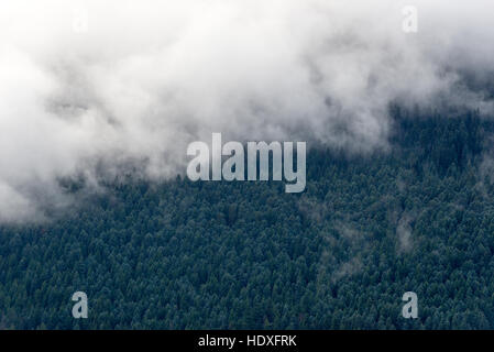 Low clouds hanging over a forested mountain slope in Mt. Rainier National Park, Washington.