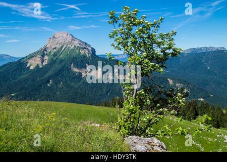 pass of pravouta,saint pierre de chartreuse,isere,france - Stock Photo