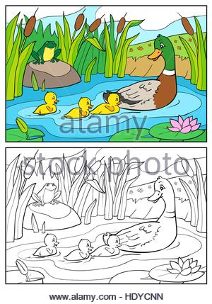 Coloring Book Or Page Cartoon Illustration Mother Duck And Ducklings With Frog Mallard