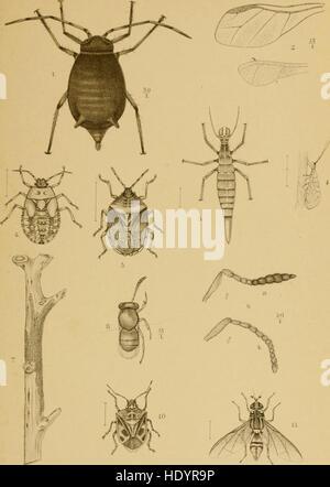 De dierlijke vijanden der koffiecultuur op Java (1897) - Stock Photo