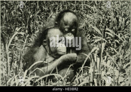 Through Central Borneo; an account of two years' travel in the land of the head-hunters between the years 1913 and - Stock Photo