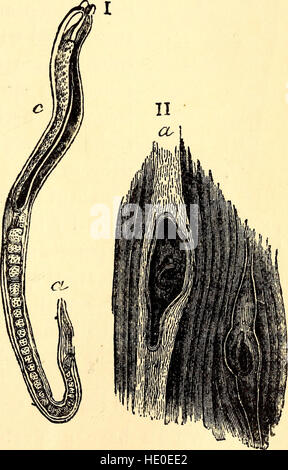 Comparative zoology, structural and systematic - for use in schools and colleges (1883) - Stock Photo