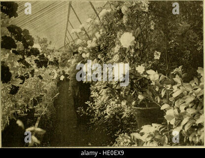 The American florist - a weekly journal for the trade (1902) - Stock Photo