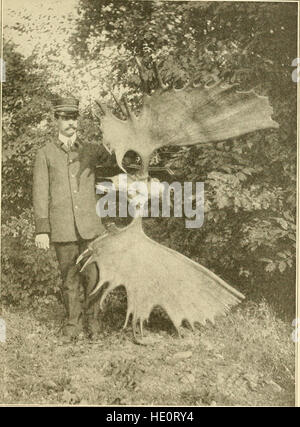 The American natural history - a foundation of useful knowledge of the higher animals of North America (1914) - Stock Photo