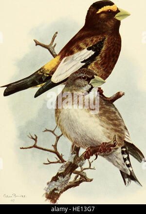The birds of California - a complete, scientific and popular account of the 580 species and subspecies of birds - Stock Photo