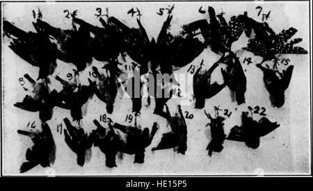 Bulletin (Pennsylvania Game Commision), no. 7 (1911) - Stock Photo