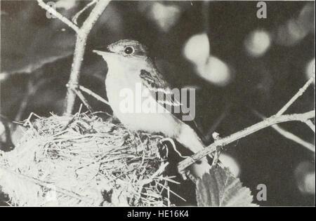 Breeding birds of Ontario - nidiology and distribution (1983) - Stock Photo