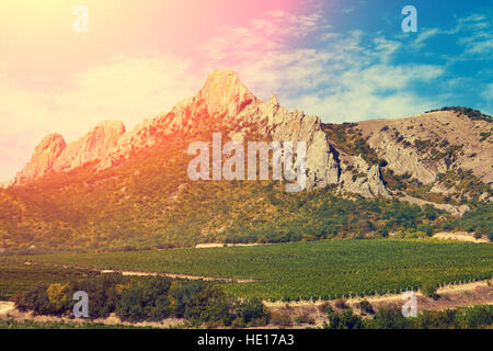 Mountain valley with vineyard in sunny day - Stock Photo