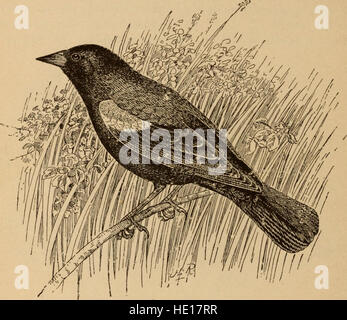 Legislation for the Protection of Birds Other Than Game Birds (1902) - Stock Photo