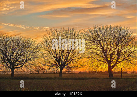 Sunrise and silhouettes of Horse Chestnut trees in a winter landscape - Stock Photo