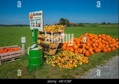 Squash (Cucurbita) and pumpkins for sale, Upper Bavaria, Bavaria, Germany - Stock Photo