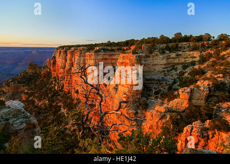 The setting sun lights up the red rock cliffs of Yaki Point on the South Rim of Grand Canyon National Park, Arizona, - Stock Photo
