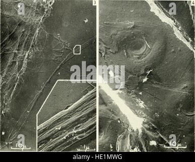 Electron microscopy; proceedings of the Stockholm Conference, September, 1956 (1957) - Stock Photo