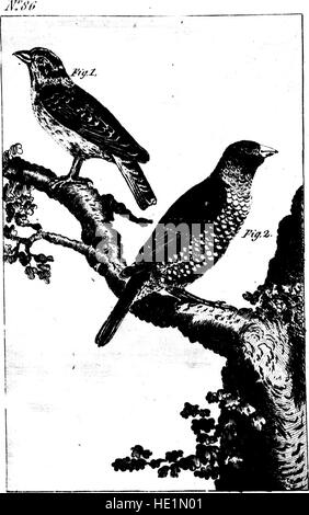 The natural history of birds (microform) - from the French of the Count de Buffon (1793) - Stock Photo