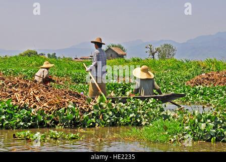 floating garden Inle Lake Myanmar - Stock Photo