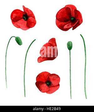Poppy clipart stock photo 93508732 alamy watercolor poppy vector clip art red flowers clipart stock photo mightylinksfo