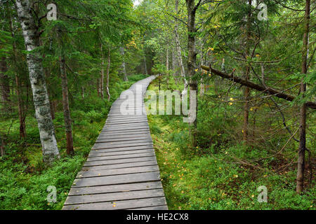 Narrow wooden pathway in the forest fen - Stock Photo
