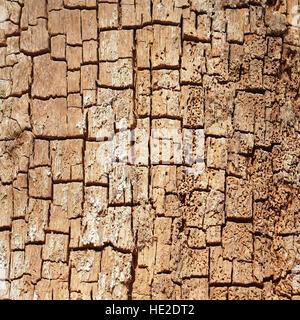 Dead tree wood eaten through by wood-boring beetle - Stock Photo
