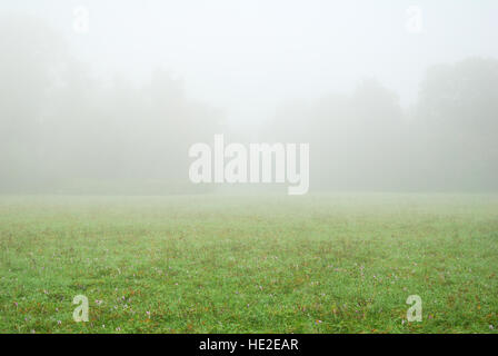 White fog and green meadow in an autumn morning - Stock Photo