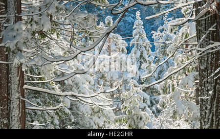 Winter snow scene in the Sierra Nevada Foothills of California - Stock Photo