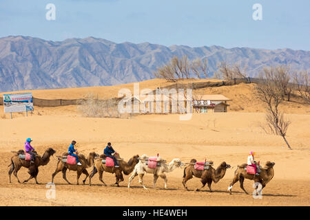 Guide and chinese tourists riding camels in the desert at Shapotou Scenic Area, Zhongwei, Ningxia, China - Stock Photo