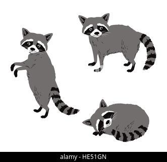 Cartoon raccoon isolated on white. Set of 3 postures. - Stock Photo