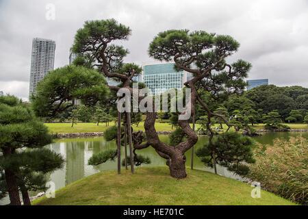 Detail of the Hamarikyu Gardens in Tokyo, Japan - Stock Photo