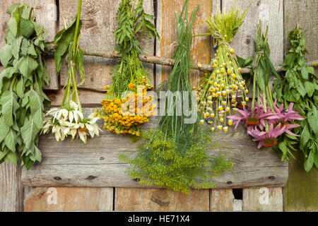 Drying medical herbs in a shadow: echinacea,chamomile,dill,tansy,melissa. - Stock Photo