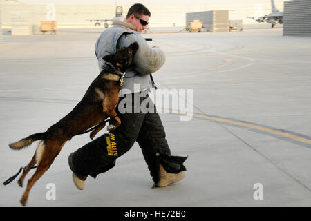 Bono, a Military Working Dog, takes down Airman 1st Class Charles Porter during a bite suit demonstration, July - Stock Photo
