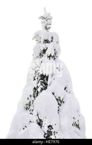 Snowy spruce fir tree closeup, fresh snow covered branches, large detailed isolated vertical - Stock Photo
