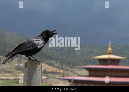 Bhutan's national bird is the raven - Stock Photo