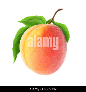 Isolated apricot. One fresh apricot fruit on a branch with leaves isolated on white background with clipping path - Stock Photo