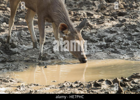 wild life around pond in Ranthambhore National park, Rajasthan India - Stock Photo