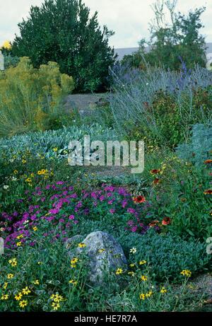 Xeriscape garden  with Perovskia, artemesia, verbena, gazania ,rock, - Stock Photo