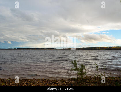 Lonely little fir growing on the shore of the lake. Storm Lake washes the roots of young spruce. - Stock Photo
