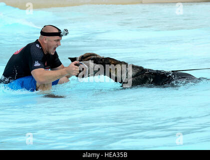 Ryan Flannigan, Tampa Police Department canine handler, assists Zoran, 6th Security Forces squadron military working - Stock Photo