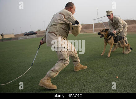 U.S. Navy Petty Officer 1st Class Patrick Yourg, left, Camp Lemonnier master-at-arms and K-9 kennel supervisor, - Stock Photo