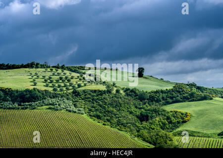Typical green Tuscany landscape in Val d'Orcia with hills, fields, trees, wineyards, olive plantations and cloudy - Stock Photo