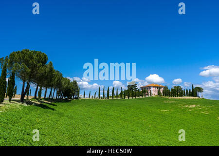 Typical green Tuscany landscape in Val d'Orcia with a farm on a hill, cypresses, pine trees and blue, cloudy sky - Stock Photo